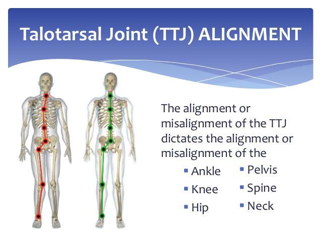 talotarsal joint